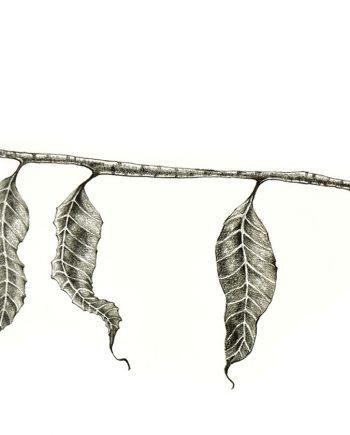 Originální kresba s motivem podzimní větvičky s listy