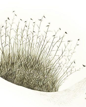 Originální kresba s motivem trsu trávy u řeky